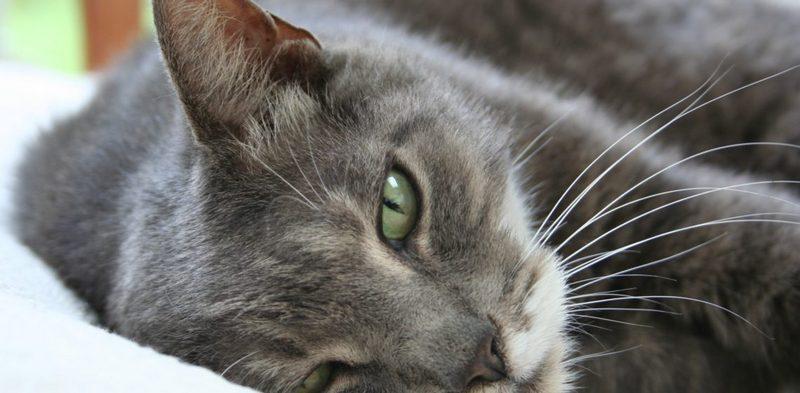 Как можно вытащить клеща у кота