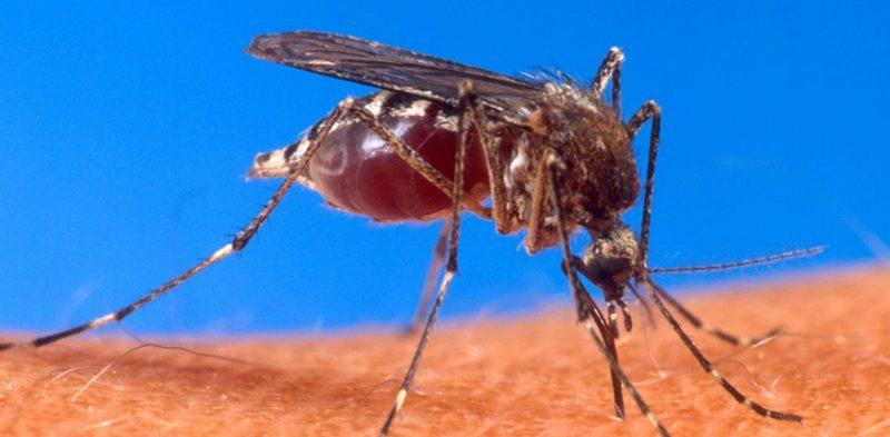 избавиться от комаров в квартире