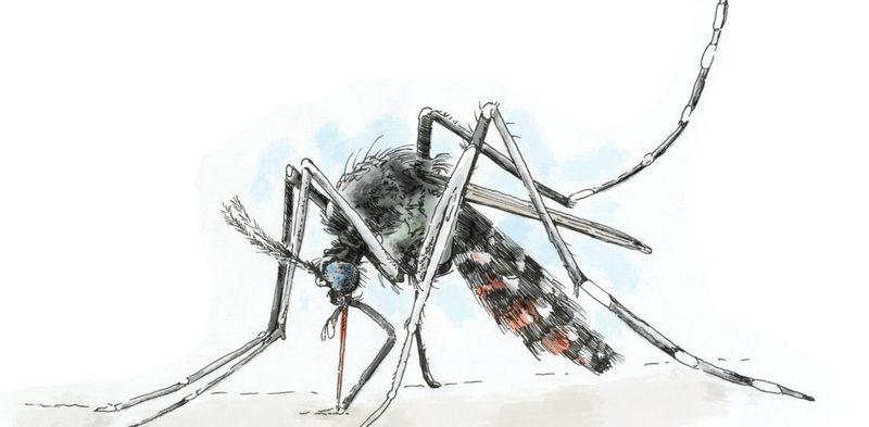 Чем опасен малярийный комар