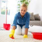 Чем можно обработать квартиру от блох: способы и средства