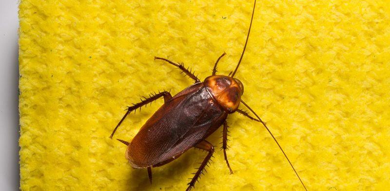 отрава от тараканов