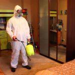 Как можно избавиться от подвальных блох в квартире?