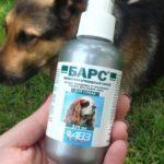 Как выбрать средство от блох для собак