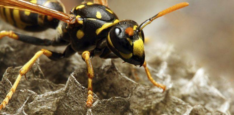 Укусы насекомых Малыши до года Обмен опытом MAMA